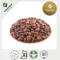 SPINE DATE SEED EXTRACT